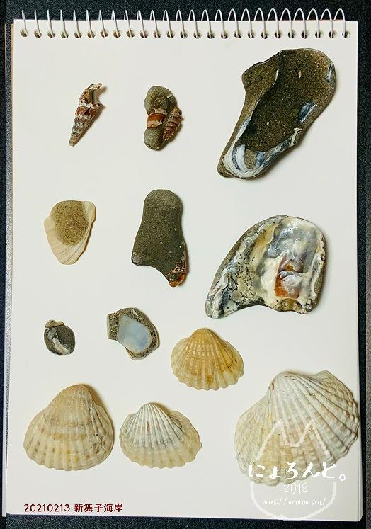 新舞子海岸でビーチコーミング/貝化石