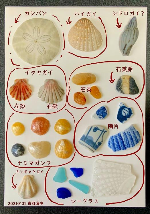 富津の布引海岸でビーチコーミング/貝図鑑