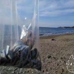 上総湊港海浜公園でビーチコーミング/成果物