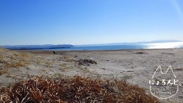 富津の布引海岸でビーチコーミング/布引海岸