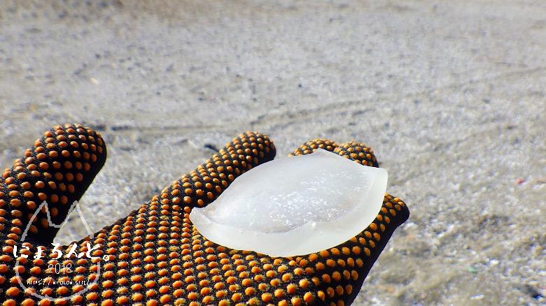 富津の布引海岸でビーチコーミング/シーグラス