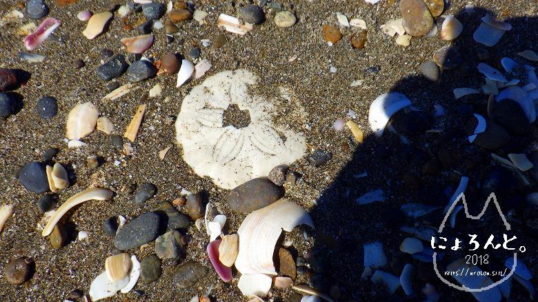 富津の布引海岸でビーチコーミング/カシパン