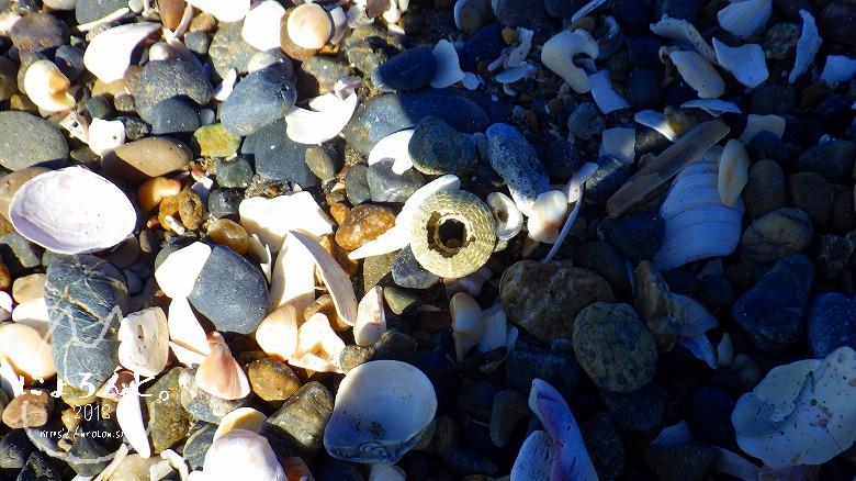 富津の布引海岸でビーチコーミング/浜のアップ