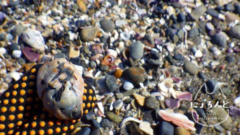 新舞子海岸でビーチコーミング/謎の石