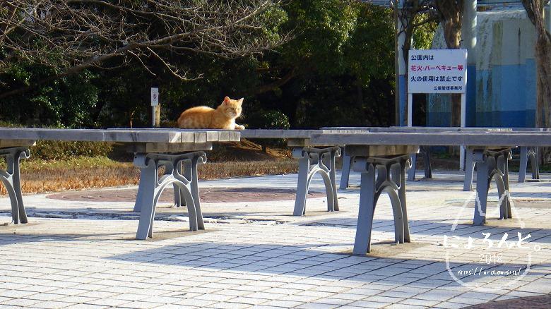 上総湊港海浜公園でビーチコーミング/地域猫ちゃん