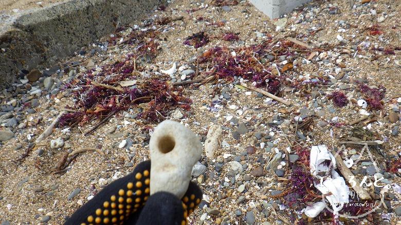 平磯海岸でビーチコーミング/穴の開いた石