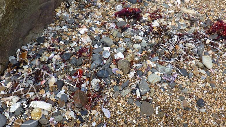 平磯海岸でビーチコーミング/石だまり