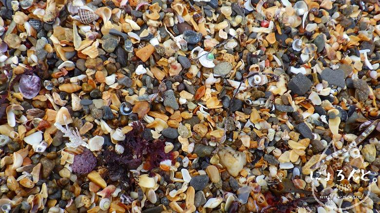 平磯海岸でビーチコーミング/浜のアップ