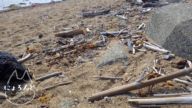 平磯海岸でビーチコーミング/木片だまり