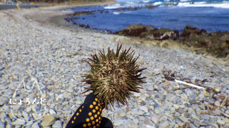 磯崎海岸でビーチコーミング/ウニ殻