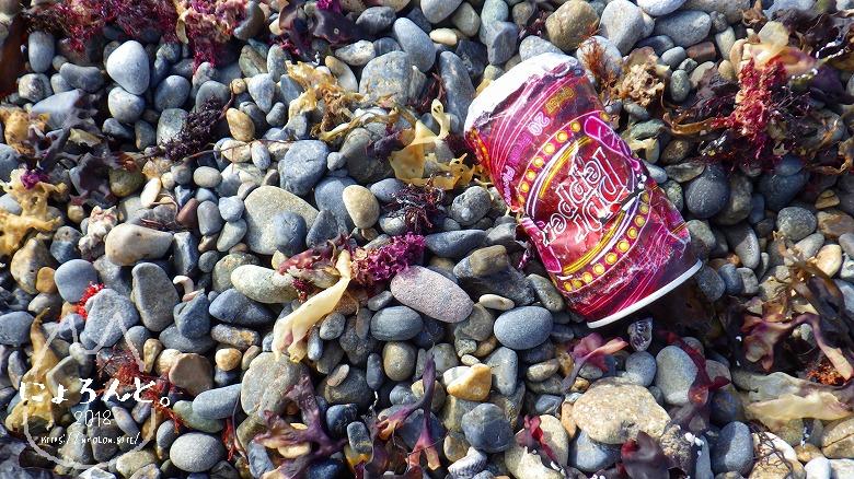 磯崎海岸でビーチコーミング/空き缶