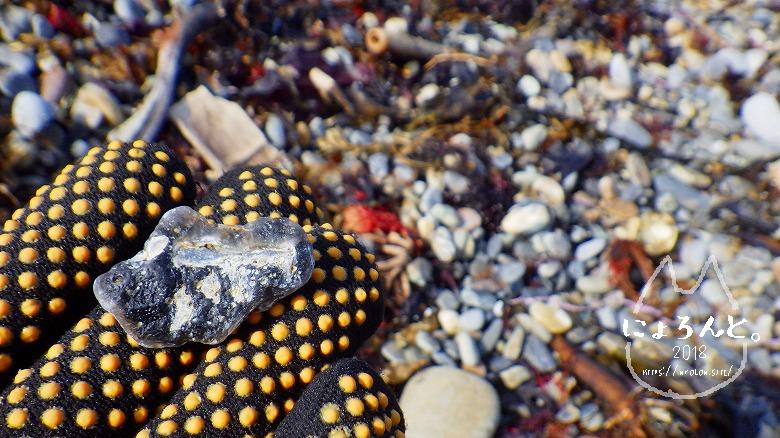 磯崎海岸でビーチコーミング/黒い石