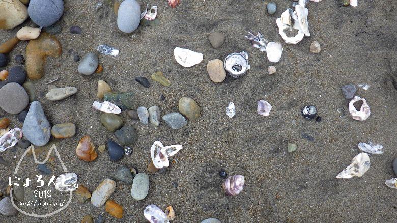 アクアワールド大洗駐車場前でビーチコーミング/牡蠣殻