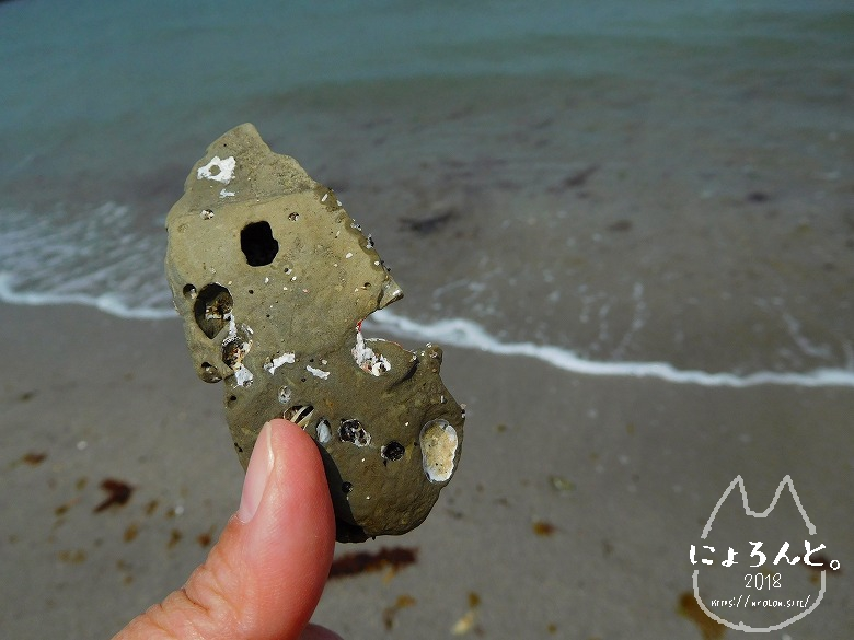 館山・坂田海岸でビーチコーミング/穴の開いた石