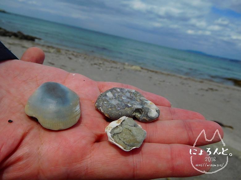 館山・坂田海岸でビーチコーミング/貝化石