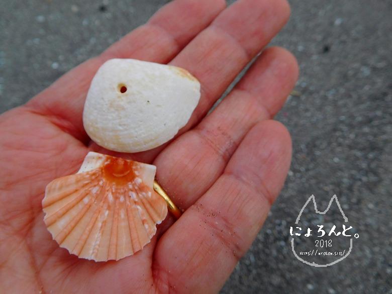 館山・塩見海岸でビーチコーミング/貝
