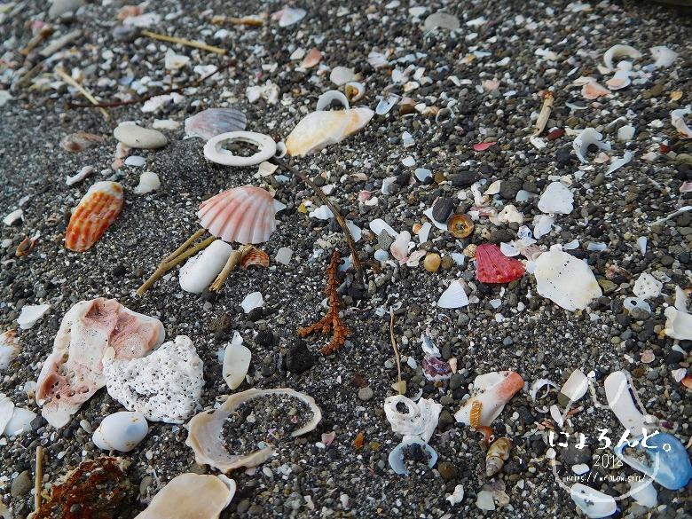 館山・塩見海岸でビーチコーミング/砂のアップ