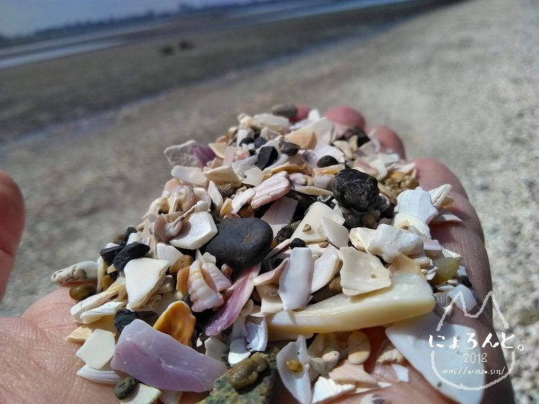 船橋三番瀬でビーチコーミング/貝殻