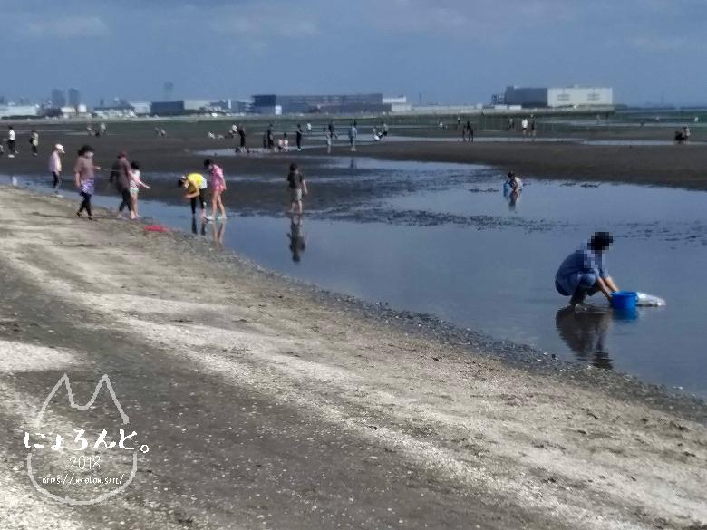 船橋三番瀬でビーチコーミング/潮干狩り