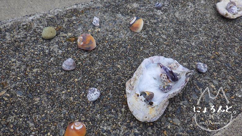大洗海岸・磯浜灯柱前でビーチコーミング/貝殻