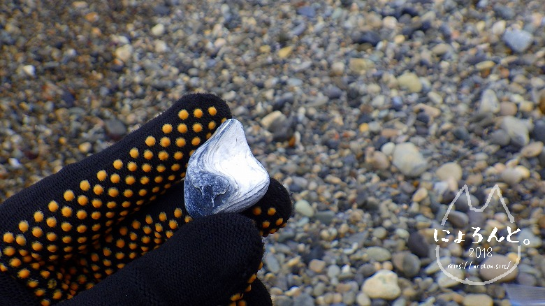 大洗海岸・磯浜灯柱前でビーチコーミング/貝なのか石なのか