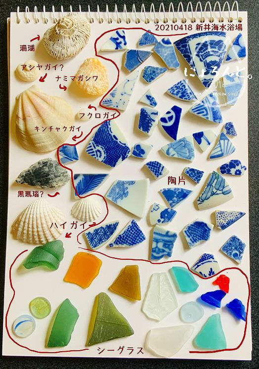 新井海岸でビーチコーミング/図鑑