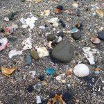 館山・平佐浦海岸でビーチコーミング/貝だまり
