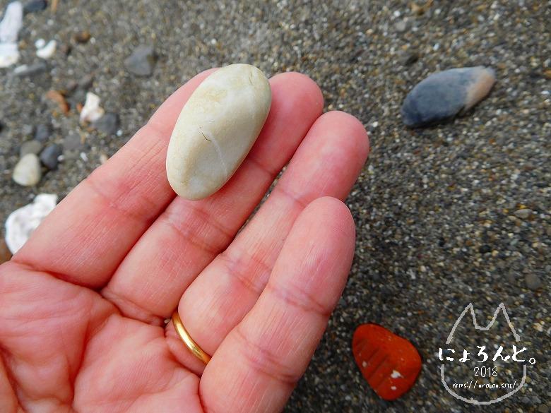 北条海岸でビーチコーミング/泥岩?