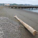北条海岸でビーチコーミング/木片