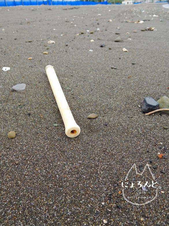 新井海岸でビーチコーミング/???