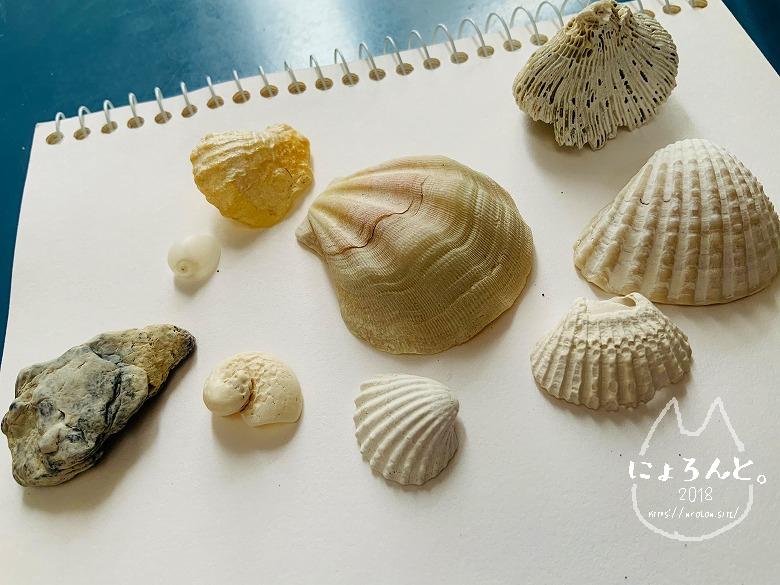 新井海岸でビーチコーミング/貝殻と石