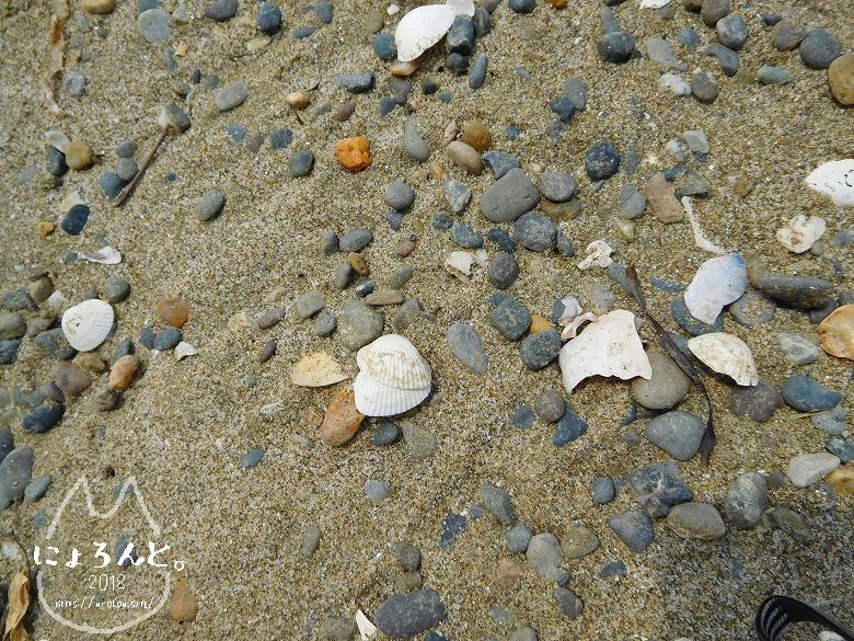 稲毛浜でビーチコーミング/浜のアップ