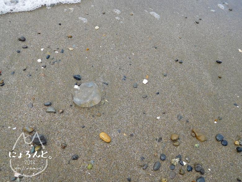 稲毛浜でビーチコーミング/くらげ