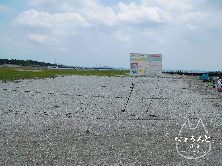 検見川浜でビーチコーミング/コアジサシ繁殖