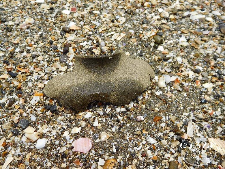 検見川浜でビーチコーミング/砂茶碗