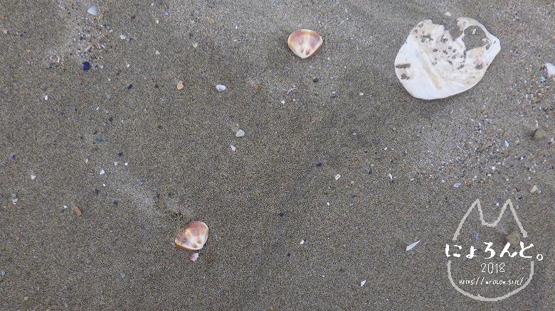 大洗海岸・サンビーチでビーチコーミング/牡蠣殻