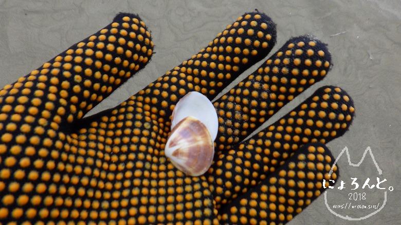 大洗海岸・サンビーチでビーチコーミング/ハマグリ?