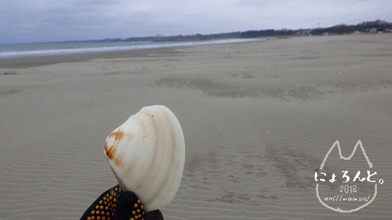 大洗海岸・サンビーチでビーチコーミング/ハマグリ