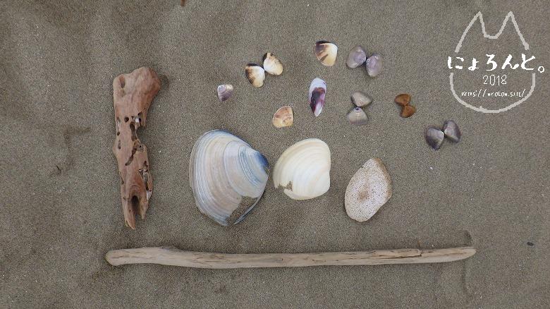 大洗海岸・サンビーチでビーチコーミング/貝図鑑