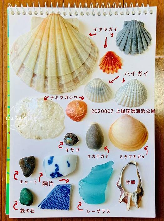 上総湊海浜公園でビーチコーミング/貝図鑑