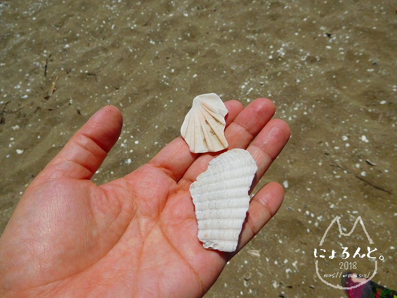 幕張の浜でビーチコーミング/二枚貝