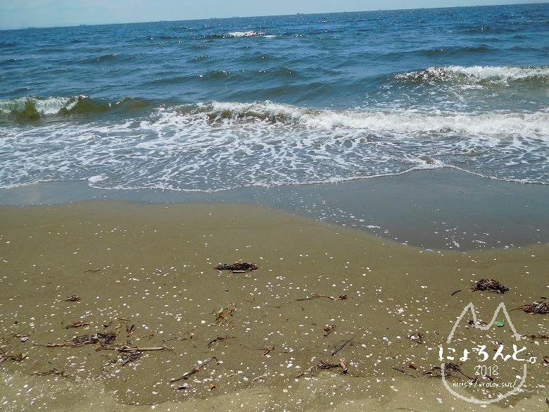 幕張の浜でビーチコーミング/波打ちぎわ