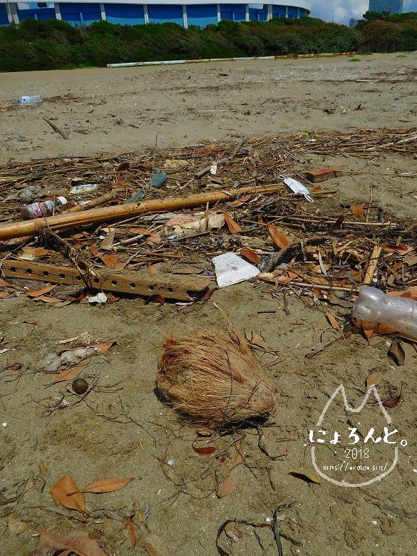 幕張の浜でビーチコーミング/ヤシの実