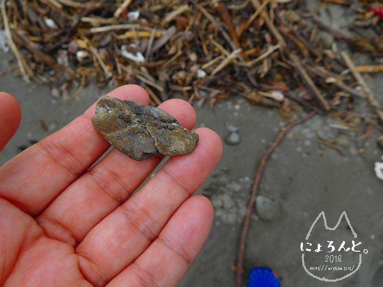 上総湊海浜公園でビーチコーミング/珪化木…?