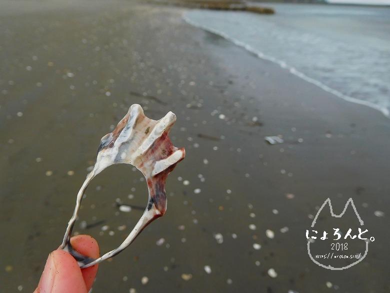 上総湊海浜公園でビーチコーミング/カキ