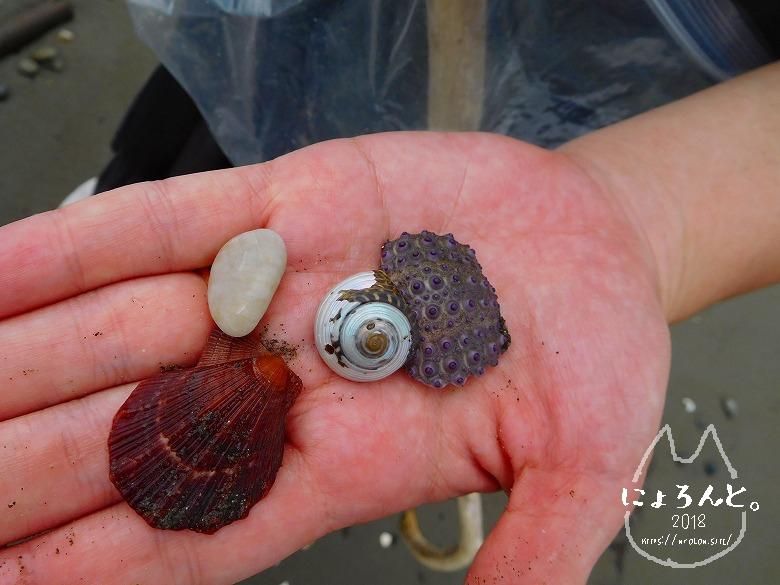 上総湊海浜公園でビーチコーミング/貝がらと石