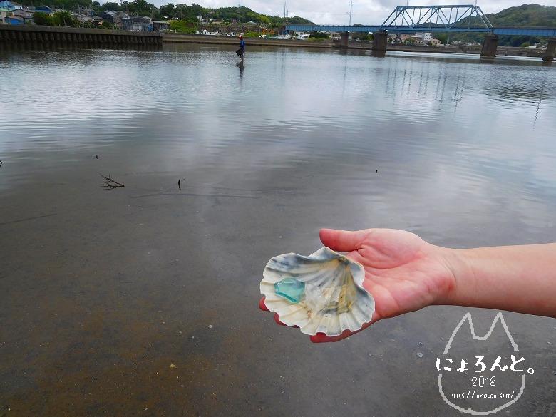貝殻にシーグラスに陶片!上総湊・湊川河口でリバーコーミング/イタヤガイとシーグラス