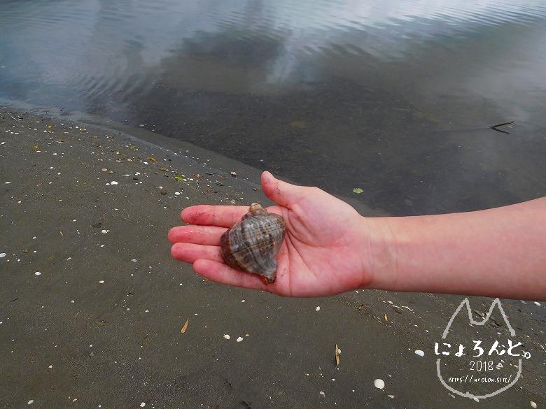 貝殻にシーグラスに陶片!上総湊・湊川河口でリバーコーミング/アカニシ?