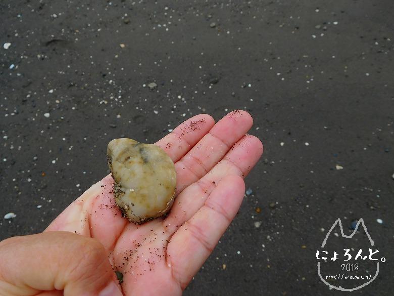 貝殻にシーグラスに陶片!上総湊・湊川河口でリバーコーミング/石英