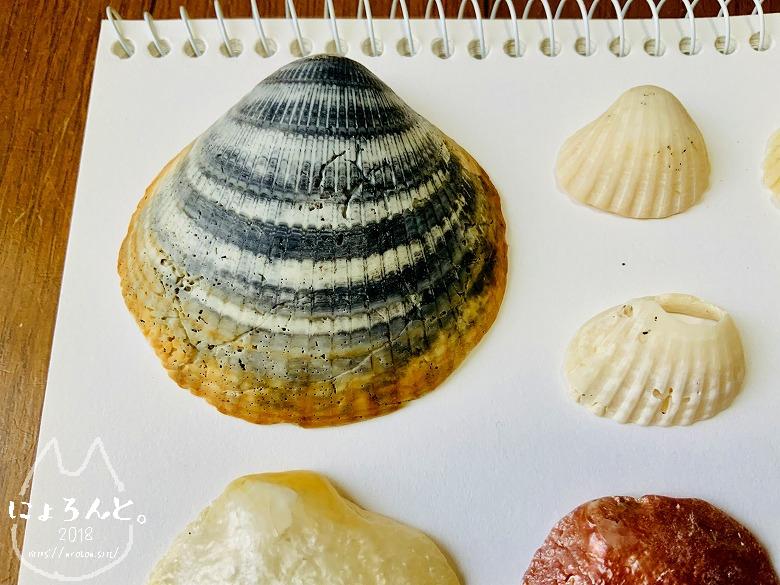 貝殻にシーグラスに陶片!上総湊・湊川河口でリバーコーミング/ミタマキガイ